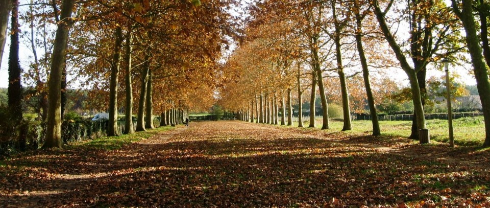 Allee-Fontenailles-Ecommoy-Sarthe1